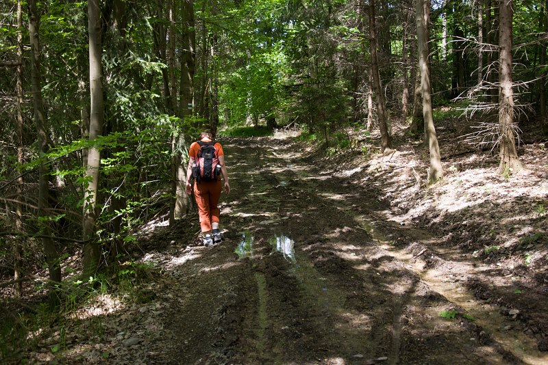 cesta-po-lesacich.jpg