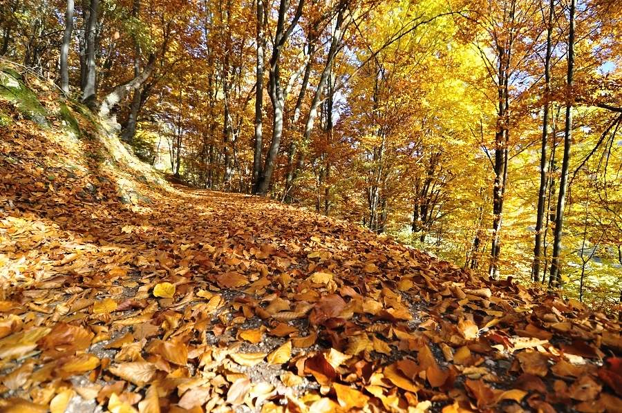 sulovske-skaly-podzim-2015-jpg05.jpg