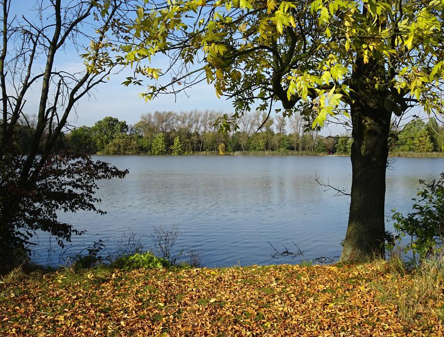 podzim-na-planske-nive.jpg