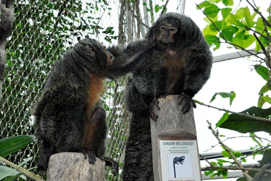 zoo-lesna-10.jpg