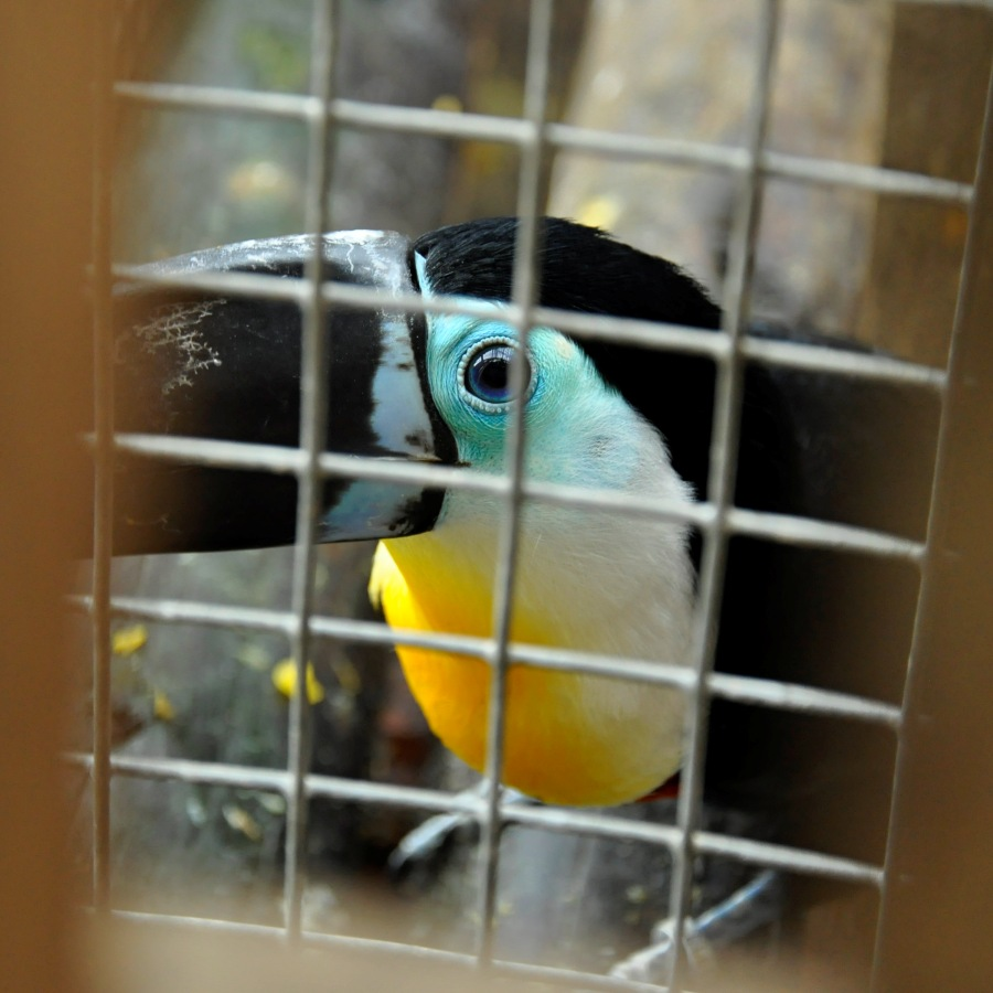 zoo-lesna-12.jpg