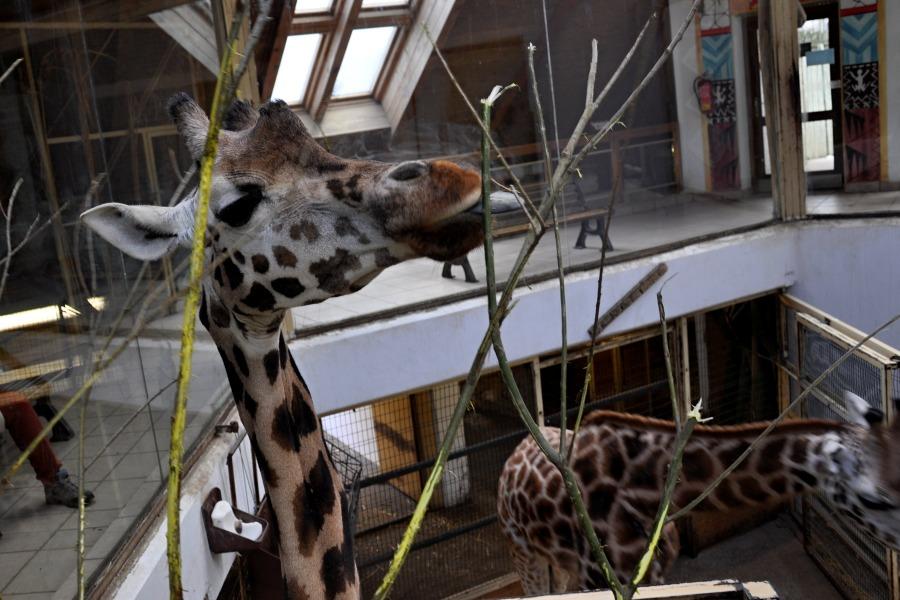 zoo-lesna-23.jpg