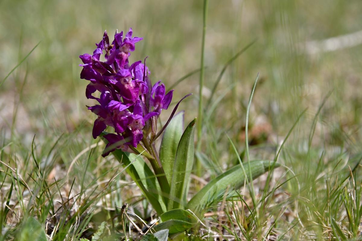 orchidej-2.jpg
