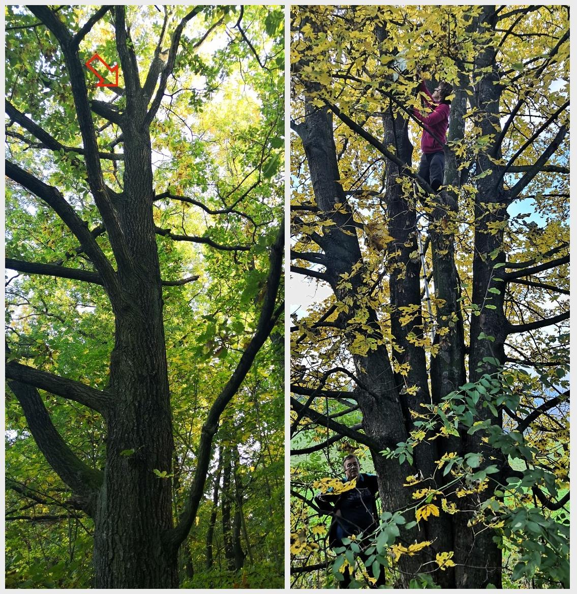 nedobytna-strom.jpg