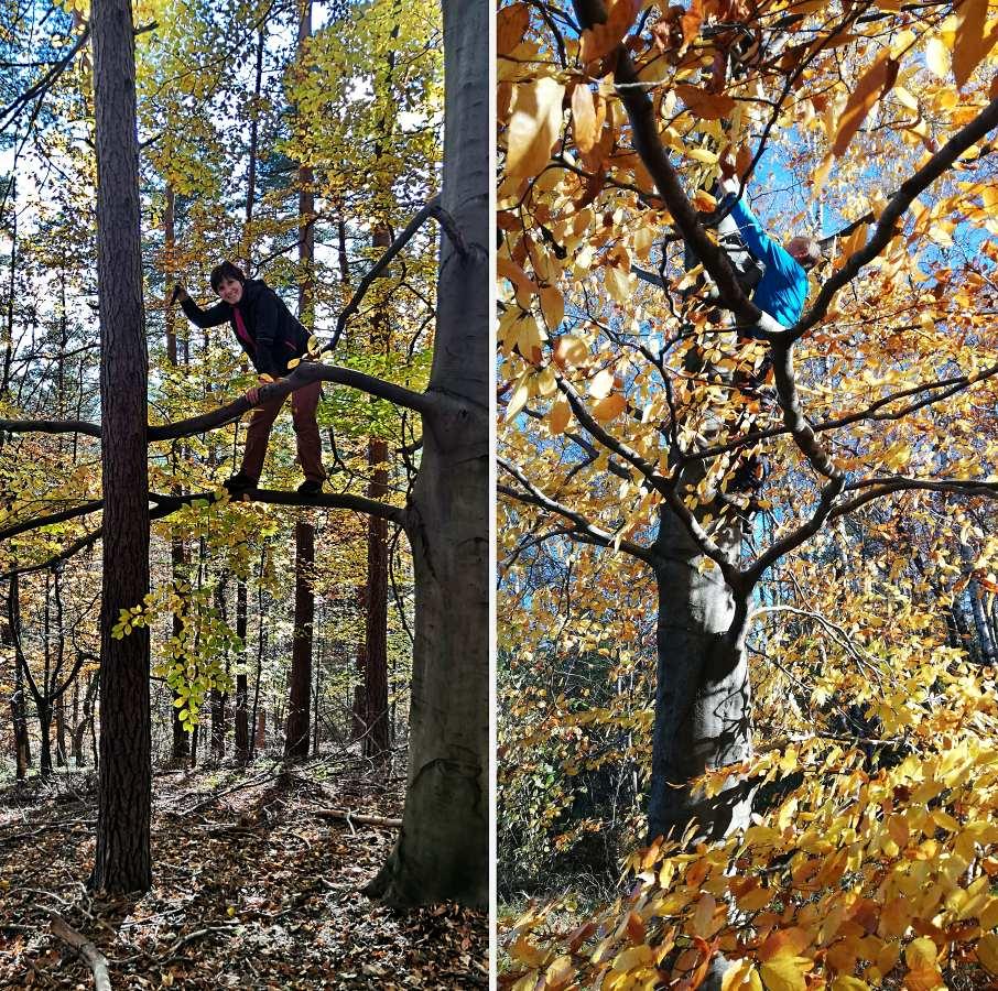 stromovky.jpg