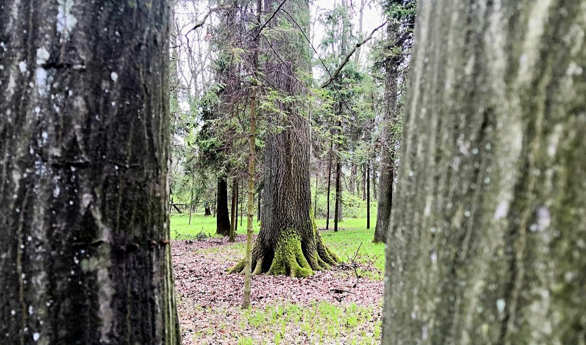 mezi-stromy.jpg