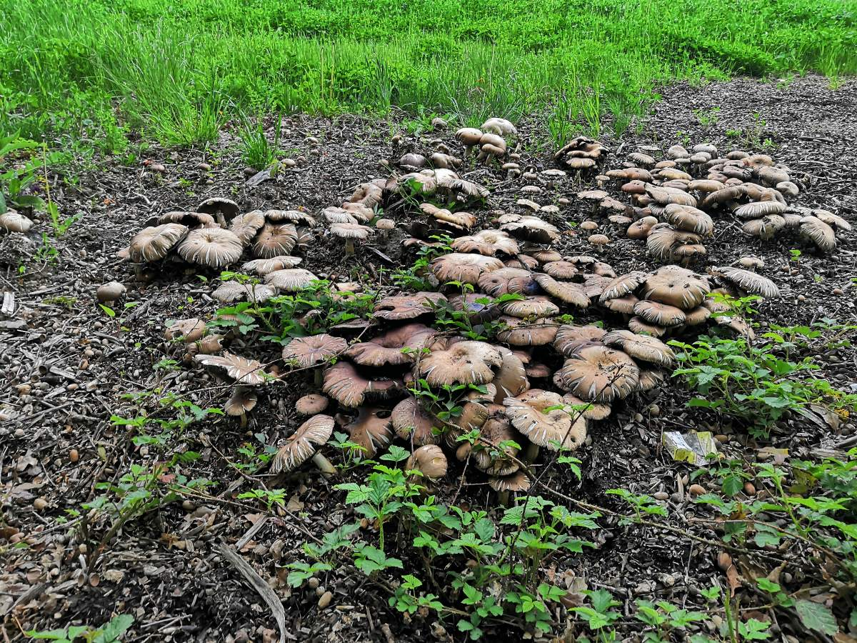 houboviste.jpg