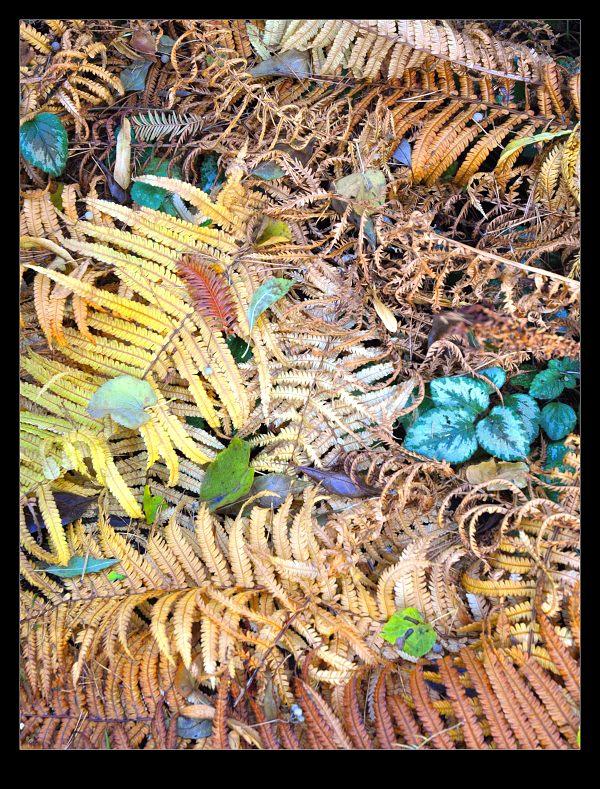 barvy-podzimu.jpg