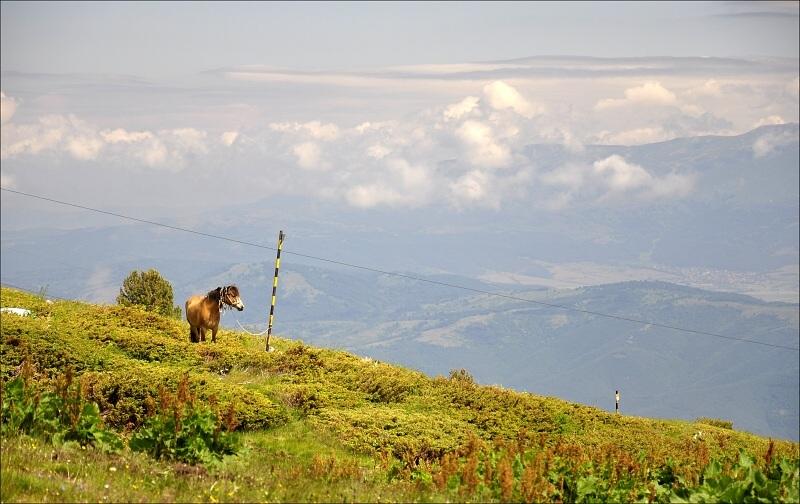 bulharsko0171.jpg