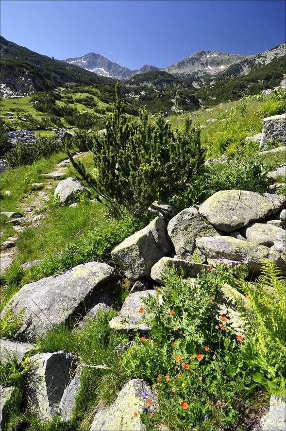 bulharsko0451.jpg