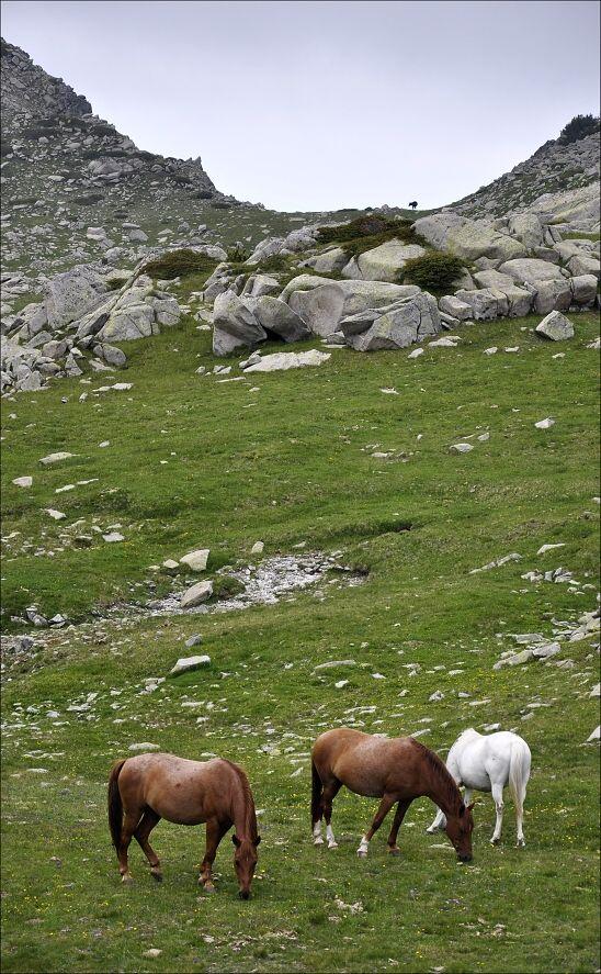 bulharsko0503.jpg