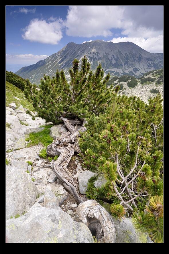 bulharsko0517.jpg