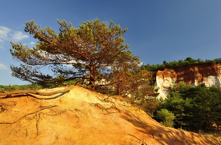 okrove-doly-_-bonsai.jpg
